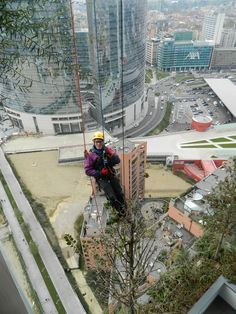 The pruning of trees far above the Italian soil at Bosco Verticale; not the typical Green Roof maintenance regime! Green Roof System, Sustainable Development, Science And Technology, Sustainability, Trees, Design, Tree Structure