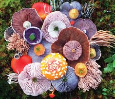 The Witch Is In • voiceofnature: Mushroom landart by Jill Bliss
