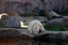 ZOOM der Zoo in Gelsenkirchen