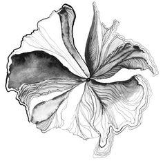 Karin Meyn | Handdrawn illustration