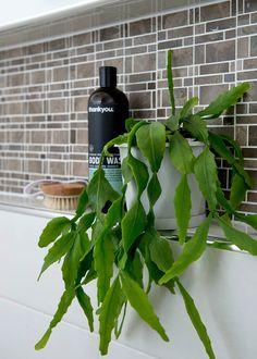 Seven of the best bathroom plants - bathroom Best Bathroom Plants, Shower Storage, Elegant Curtains, Modern Master Bathroom, Rustic Bathrooms, Modern Bathrooms, Boho Bathroom, Bathroom Ideas, Modern Masters