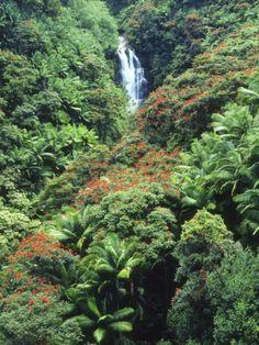 Waterfall in a Tropical Rain Forest, Hawaii. #waterfall #hawaii