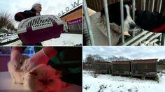 Weterynarz ukarany za pomoc zwierzętom