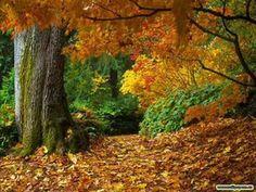 Richard Clayderman - Autumn Leaves (+afspeellijst)