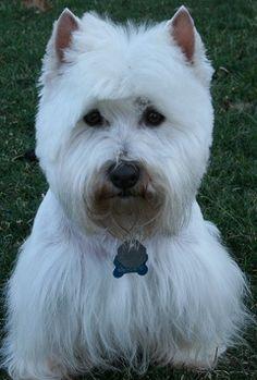 My dog Charlie. Dale, Edwards, Missouri. 10/27/13.