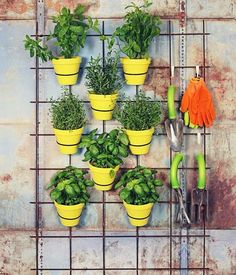 Wandgitter DIY ideas for the garden lattice-wall-yellow-tontoepfe-herbs # vertical vegetable garden Verticle Garden, Herb Garden Planter, Eva Garden, Vertical Garden Design, Summer Garden, Culture D'herbes, Lattice Wall, Balcony Plants, Balcony Gardening