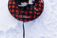 Our Sonic Snowtubes aren't just for humans Winter Fun, Ll Bean, Outdoor Fun