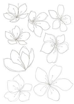 asian floral line drawing - Google Search