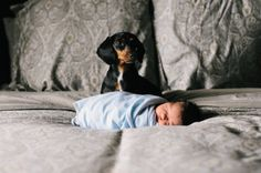 Newborn and Puppy Photography | Chicago Photographer