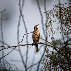 #cormorant #birds #posing Photo S, Birds, Art Prints, Gallery, Animals, Art Impressions, Animales, Roof Rack, Animaux