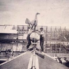 The spurs cockrel being placed on top of white hart lane, during the 1950's, its still there