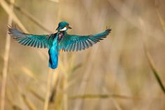 Hovering by Claudio Cavalensi on 500px