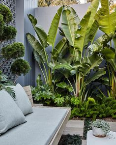 That spot in the garden to zone out. Lush green planting with Strelitzia nicolai, Fatsia japonica & cloud pruned Juniper. Tropical Garden Design, Modern Garden Design, Tropical Landscaping, Landscape Design, Tropical Gardens, Landscape Plans, Ideas Estanque, Outdoor Plants, Outdoor Gardens