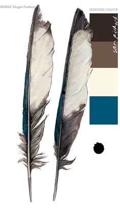 Planet Sam: Colour from the Season - Magpie feather blue