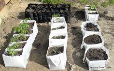 Vegetable Garden in a Bag - Creative Cain Cabin