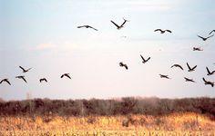 birds on the horizon - Google Search