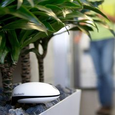 Wi-Fi Plant Sensor that measures soil moisture, temperature, and light intensity, and notifies you when your plants need attention. Cool!