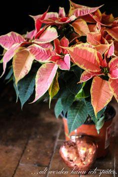 Alter, Plant Leaves, Plants, Christmas Stars, Plant, Planets