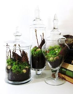 Driven By Décor: Apothecary Jars - Tons of Uses. I like  the green live look of these