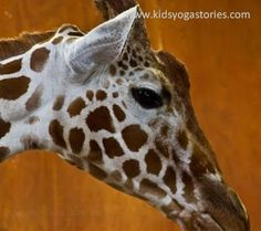 Giraffe ~ Arms stretched up high, eating leaves from a tree (kids yoga pose)