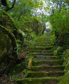 visitheworld: Green stairs in Palácio da Pena park, Sintra, Portugal (by NunoVicente).