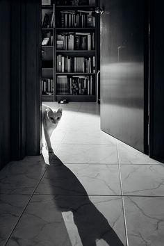 The cat's long shadow | por Jaume Taulats
