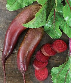 """Cylindra Beet - This beet is made for slicing! A unique long and cylindrical beet gives 3 to 4 times more uniform slices than round beets. Sweet, dark red roots are 8"""" long, 1¾"""" across. Baby beets and greens make excellent eating."""