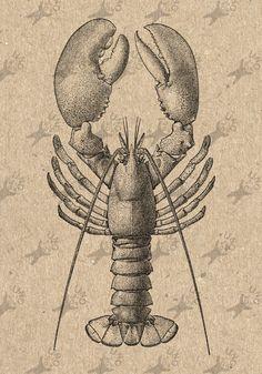 Vintage image Lobster Crawfish Omar Instant Download Digital printable clipart graphic - scrapbooking, burlap, kraft, mail art etc HQ 300dpi by UnoPrint on Etsy