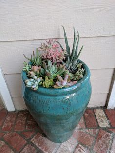 Succulent garden just planted for front entry way