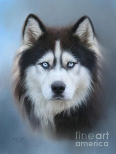 Title  Siberian Husky   Artist  Lena Auxier   Medium  Digital Art - Digital Painting