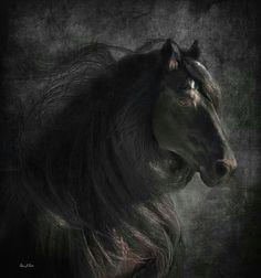 Amazing #horses