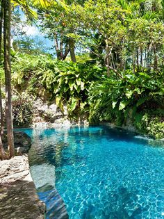 Enjoy a swim in this lagoon-like pool at Fustic House.