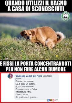 Real Tutorial and Ideas Crazy Funny Memes, Wtf Funny, Funny Quotes, Italian Memes, Haha, Images, Jokes, Comics, Animals