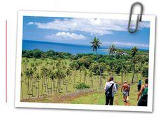 Vanuatu Paradise - Epi