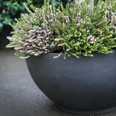 Bodacia Bowl Planter - Textured Grey