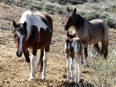 HELP FEED 65 WILD HORSES SAVED FROM SLAUGHTER (Let 'Em Run Foundation & the Wild Horses who need to be fed.)