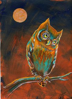 'Coy Moonlit Owl 082' by Clancy Cavnar