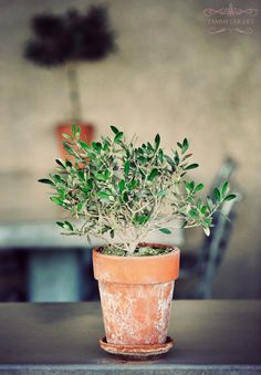 """Love the clay pots when they """"grow"""" the white or mossy """"patina"""". This is really pretty."""