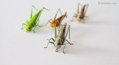 Realistic Hoppers - Grasshoppers