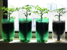 make self-watering planters from soda bottles.     (found on flickr after google searching)