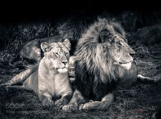 King and Queen by denisananiadis. @go4fotos