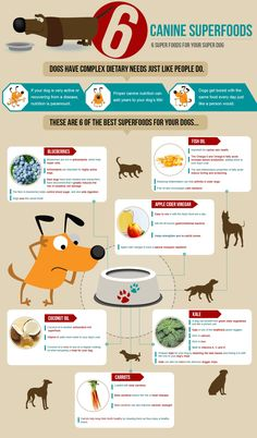canine superfoods