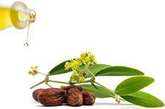 Olio di jojoba per la pelle del viso: usi e rimedi naturali utili per trattare diversi disturbi come acne ed eczema, idratare la cute, proprietà anti invecchiamento, contro le rughe, struccante e altro Anti Invecchiamento, Plants, Beauty, Plant, Planting, Planets