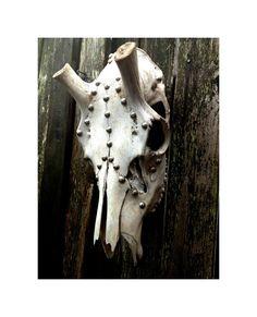 SOLD Real Animal Skull Art Decorated Elk Skull to see listing  http://www.etsy.com/shop/menasrusticdecor