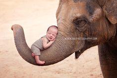 San Diego newborn photographer, elephant nursery decor, baby on elephant, newborn elephant ideas Newborn Baby Photography, Family Photography, Newborn Elephant, Elephant Nursery Decor, Pacific Beach, Maternity Photographer, Ocean Beach, San Diego, Animals