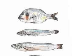 """Check out new work on my @Behance portfolio: """"Fish Dish"""" http://be.net/gallery/54700221/Fish-Dish"""