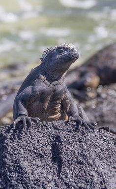 How To Prepare For A Trip To The Galapagos Islands. The Viking Abroad #galapagos #islasgalapagos #galapagosislands #thegalapagosislands #Ecuador #southamerica