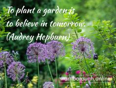 Learn for personal or to boost your opportunities. The world is literally your oyster. Choose our to build up your or Start anytime, anywhere. Visit our website: warnborough. Audrey Hepburn, Oysters, Garden Plants, Opportunity, Believe, Knowledge, Herbs, Learning, World