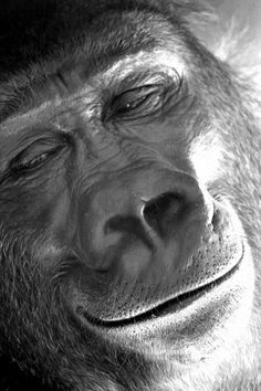 Gorilla smile