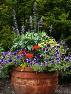 Voilà l'arrangement parfait pour les amateurs de plantes uniques pouvant bien supporter les grandes chaleurs. Malgré la délicatesse de ses fleurs rappelant celles de l'orchidée, l'angélonia est robuste, tout comme ce magnifique géranium aux belles grosses fleurs.